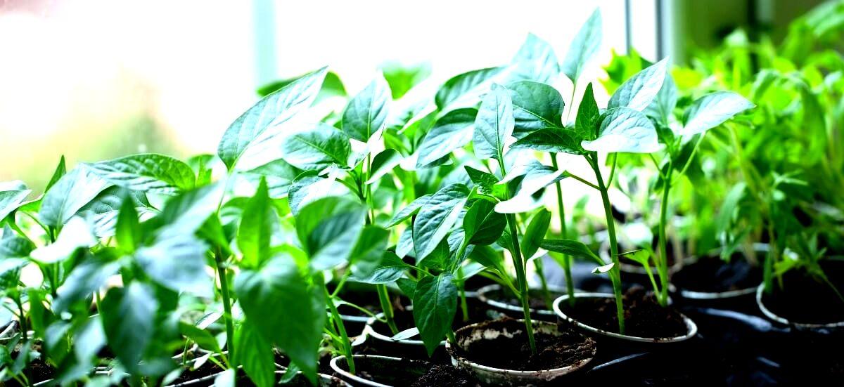 купить удобрение ургаса эмикс компании Арго для выращивания рассады, хорошего урожая