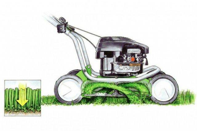 Функция мульчирования оправдает себя многократно: мульча не даст сорнякам прорасти, замедлит испарение и снизит потребность в поливе, уменьшится потребность и в удобрениях