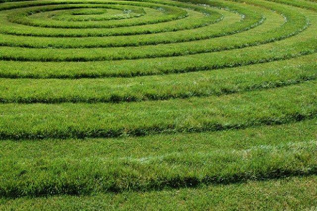 Чтобы избежать появления сорняков и сберечь ровный графичный вид газона, весной, после второго покоса, следует обработать его предвсходовыми гербицидами