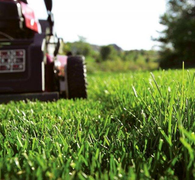 Идеальная высота скашивания травы около 5 см, если вы досеиваете новую траву к уже растущей, и 7-8 сантиметров – для всех остальных случаев