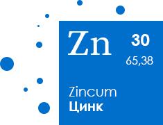 stelmas-zn-img8.jpg