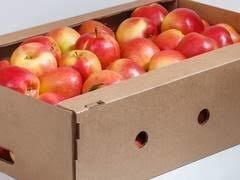 Гофролотки для фруктов, овщей, ягод