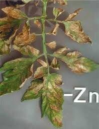 Хелатный Корректор питания белка углеводов РЕАКОМ ХЕЛАТ ЦИНКА, Zn 64 ОЭДФ. Подкормка Кукурузы монохелат Цинк по листу. - фото pic_82e76e4f956c07f_700x3000_1.jpg