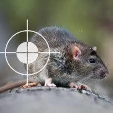 Родентицид СТОП ГРЫЗУН, отрава от крыс и мышей, зерновая приманка со вкусом арахиса. Мешок 5 кг. - фото pic_21ccd5786b2b604_700x3000_1.jpg