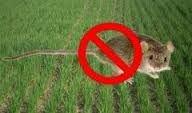 Родентицид Отрава СТОП ГРЫЗУНАМ, защита от крыс и мышей, зерновая приманка со вкусом арахиса. Мешок 1кг. - фото pic_cf7dd1a76cbaee4_700x3000_1.jpg