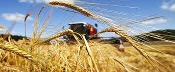 Листовая подкормка микроудобрением зерновых Реаком Плюс С Зерно. Стимулятор роста по зерновым в фазах роста растений. - фото pic_6949e25f6cf6396_700x3000_1.jpg