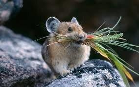 Родентицид Щелкунчик, отрава от крыс и мышей, грызунов бродифакум, парафиновые брикеты. Ведро 6 кг. - фото pic_cd8215650e7104f_700x3000_1.jpg