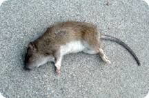Родентицид Щелкунчик, отрава от крыс и мышей, грызунов бродифакум, парафиновые брикеты. Ведро 6 кг. - фото pic_8197adc6bbc0634_700x3000_1.jpg