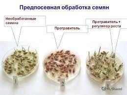 Агрохімічна пропозиція по обробці посадкового матеріалу суспензіями та рідкими добривами. - фото pic_df04b06bcf3cc95_700x3000_1.jpg