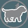 Заменитель молока Royal Canin Baby Dog Milk - Роял Канин  для щенков, 2кг - фото 1
