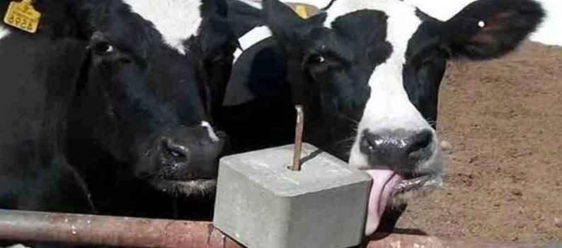 Соль лизунец для коров