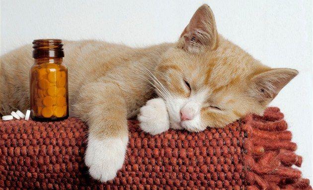 Все о кошках Записи в рубрике Все о кошках Дневник Love_65 : LiveInternet - Российский Сервис Онлайн-Дневников