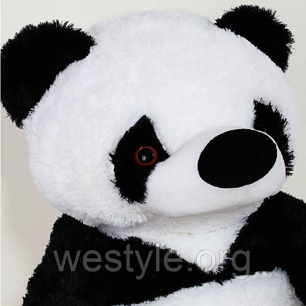 Панда, фото 5