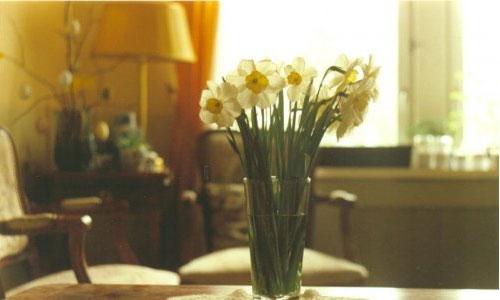Вазы - фото Как выбрать вазу для цветов