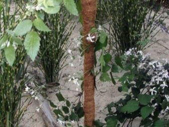Подставки и опоры для растений - фото 16