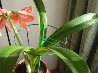 Подставки и опоры для растений - фото 24