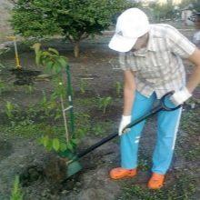 Черенки для садового инструмента - фото 5