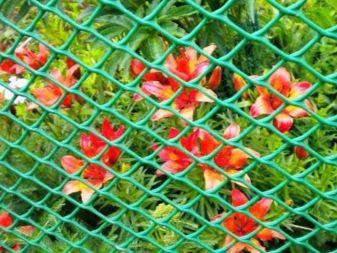 Сетки садовые - фото 22