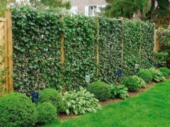 Сетки садовые - фото 53
