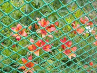 Сетки садовые - фото 23