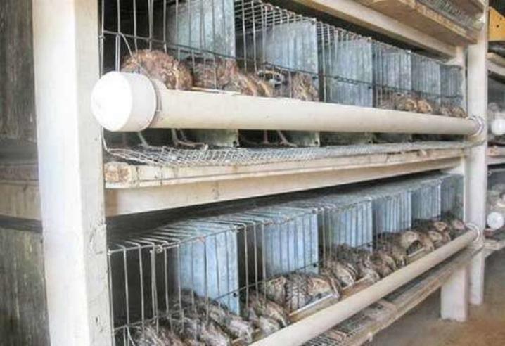 Кормушки, поилки для домашних животных - фото 30